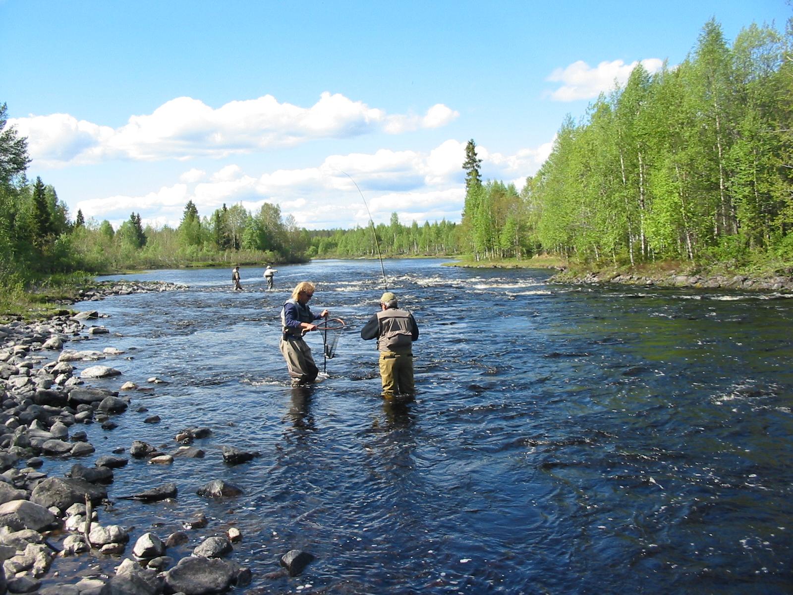 kostonjoki kalastus